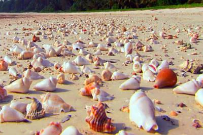 She Sells Sea Shells At The Sea Shore Seaweed And Sea Shells Beaches Of Zanzibar Tanzania Poster by Navin Joshi