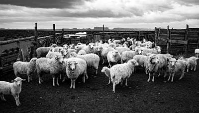 Sheep Corral Poster