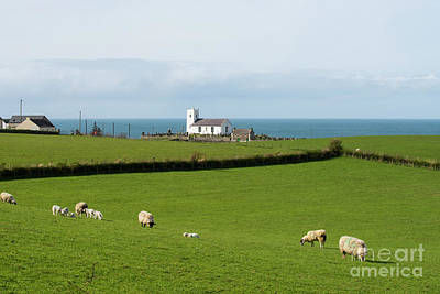 Sheep Grazing On Irish Coastline Poster by Juli Scalzi