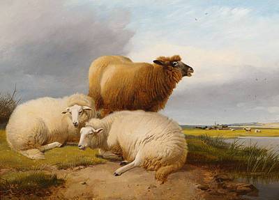 Sheep In A Landscape Poster