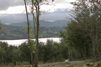 Sheep Near Lough Eske Poster