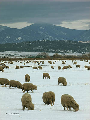 Sheep On Winter Field Poster