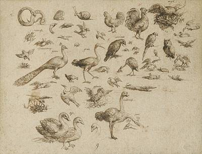 Sheet Of Studies Of Birds And Animals Poster by Celestial Images