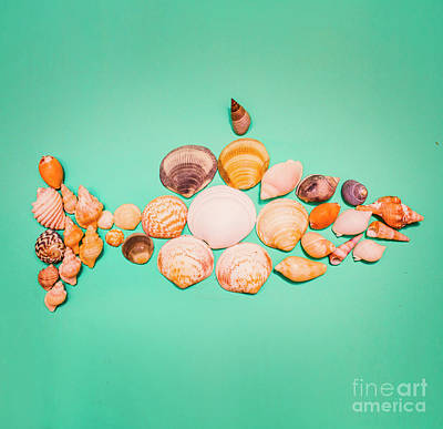 Shell Fish Poster by Jorgo Photography - Wall Art Gallery