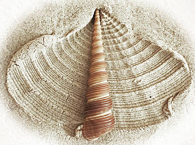 Shell In The Sand Poster