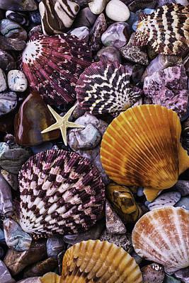 Shells And Stones Poster by Garry Gay