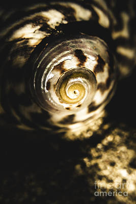 Shells In Detail Poster by Jorgo Photography - Wall Art Gallery