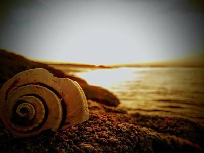 Shells On Fernandina Beach Poster