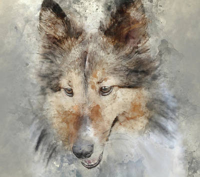 Sheltie - Digital Art Watercolor Poster by Brandon Bourdages