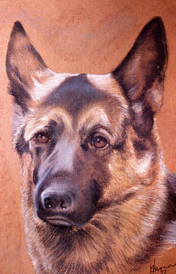 Poster featuring the pastel Shepard by Harvie Brown