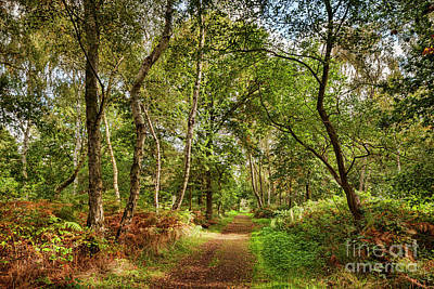 Poster featuring the photograph Sherwood Forest, England by Colin and Linda McKie