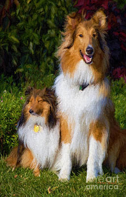 Shetland And Collie Poster