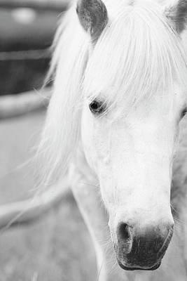 Shetland Pony Poster by Tina Lee