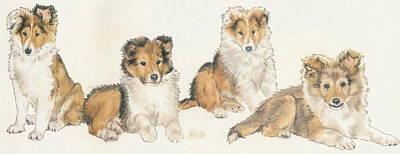 Shetland Sheepdog Poster by Barbara Keith