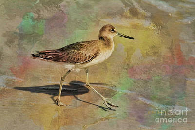 Poster featuring the painting Shore Bird Beauty by Deborah Benoit