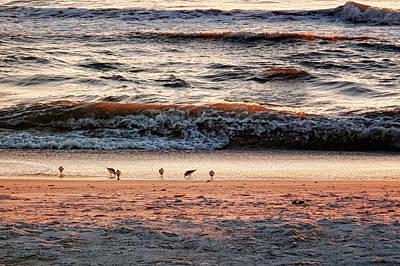 Poster featuring the photograph Shorebirds by Lars Lentz