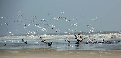 Shorebirds On The Beach Poster