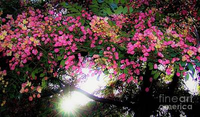 Poster featuring the photograph Shower Tree Flowers And Hawaii Sunset by D Davila