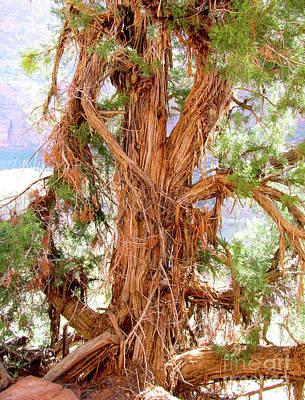 Shredded Juniper Tree Poster