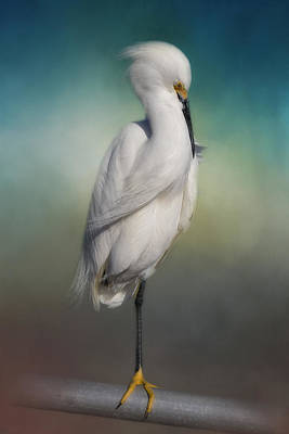 Shy Egret Poster