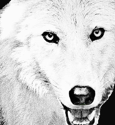 Shy Wolf Poster by Debra     Vatalaro