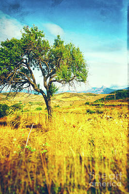 Poster featuring the photograph Sicilian Landscape With Tree by Silvia Ganora