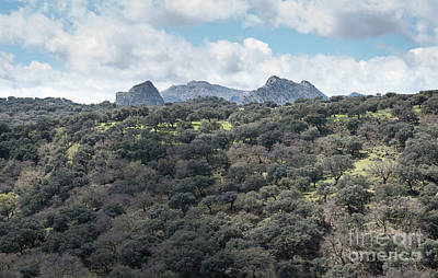 Sierra Ronda, Andalucia Spain Poster