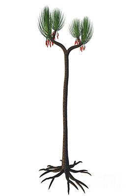 Sigillaria Scutellata Tree Poster by Corey Ford