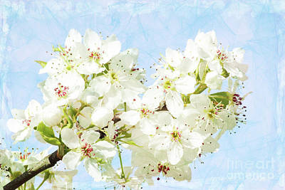 Signs Of Spring Poster by Inspirational Photo Creations Audrey Woods
