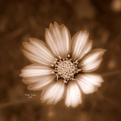 Silent Petals Poster by Trish Tritz