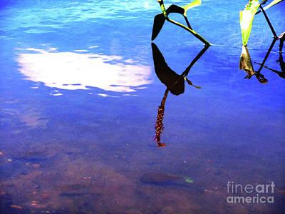 Silhouette Aquatic Fish Poster