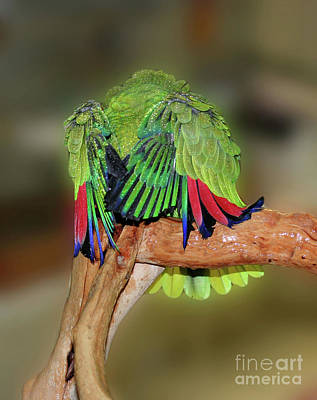 Poster featuring the photograph Silly Amazon Parrot by Smilin Eyes  Treasures