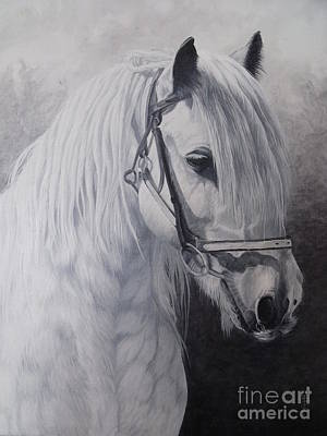 Silver-gypsy Cob Poster by Pauline Sharp
