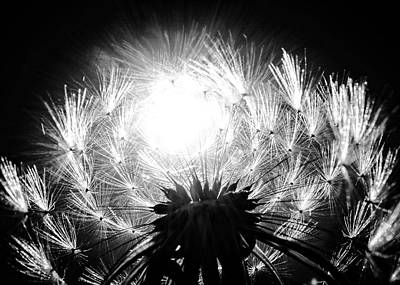 Silvered Dandelion Poster by LeAnne Perry