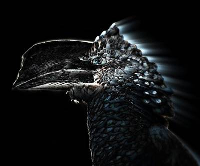 Silvery - Cheeked Hornbill Poster by Andy Klamar