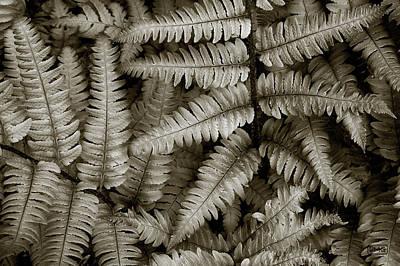 Silvery Ferns Poster by Dave Gordon