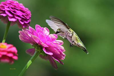 Simple Pleasure Hummingbird Delight Poster