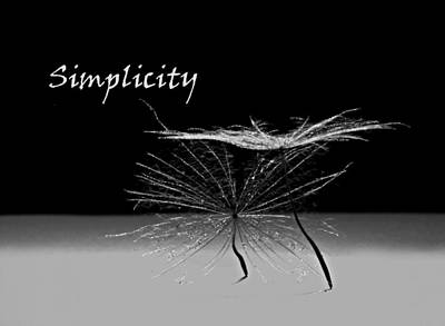 Simplicity Pods Poster by Barbara St Jean
