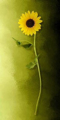 Poster featuring the photograph Single Long Stem Sunflower by Debi Dalio