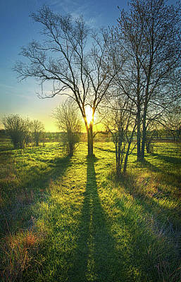 Poster featuring the photograph Single Moments by Phil Koch