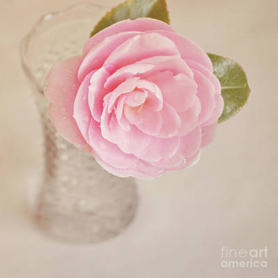 Poster featuring the photograph Single Pink Camelia Flower In Clear Vase by Lyn Randle