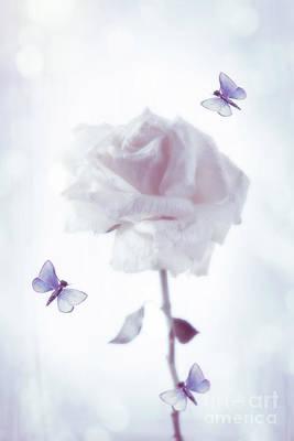 Single Rose Stem Poster by Amanda Elwell
