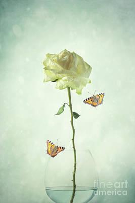 Single Stem White Rose Poster