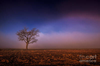 Single Tree In The Mississippi Delta Poster