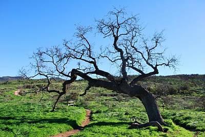 Single Tree Over Narrow Path Poster