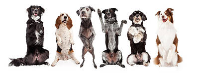 Six Dogs Standing Forward Together Begging Poster