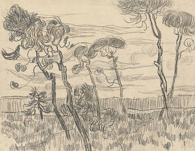 Six Pines Near The Enclosure Wall Poster by Vincent Van Gogh