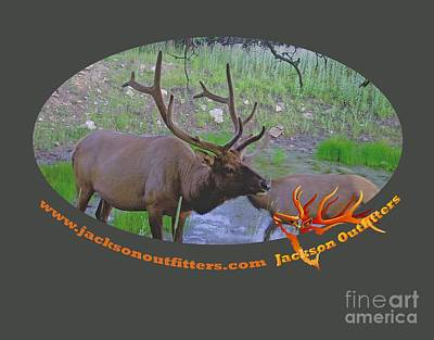 Six Point Bull Elk In Colorado Poster by Dale Jackson