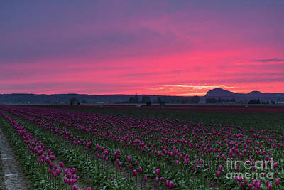 Skagit Valley Burning Skies Poster by Mike Reid