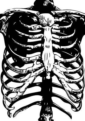 Skeleton Ribs Poster
